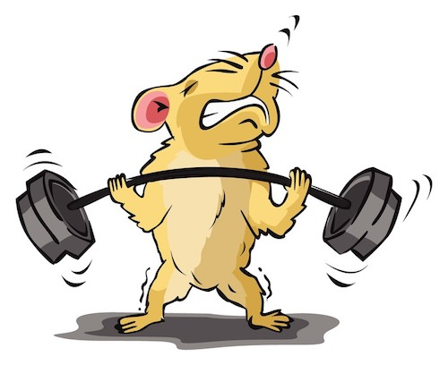 Business Musings: Writers And The Hamster Wheel Of Doom
